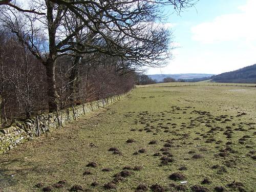 Scottish Molehills