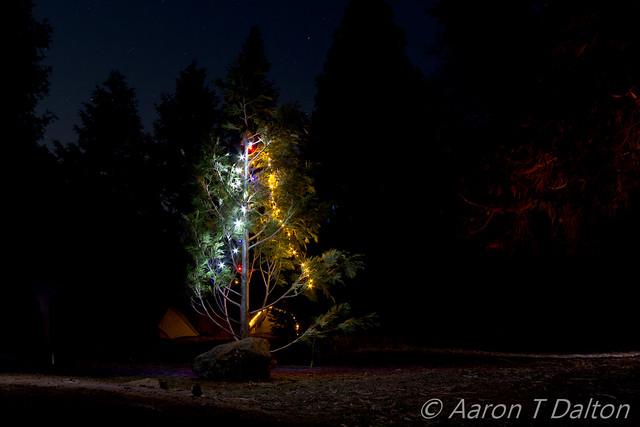 A Proper Christmas Tree