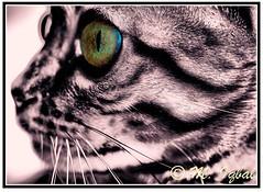 Nishi: 2011