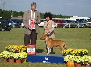 Winners ,Best of Winners, Best of Breed and Group #2 under honorable judge Mr. Jon Cole