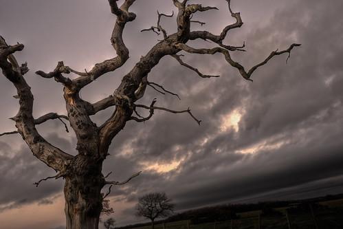 winter sunset sky cloud tree field dark landscape dead branch dusk farm 5d 1740mm hdr canon1740f4lusm mygearandme