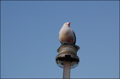 Bird on a lightpole