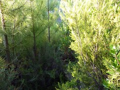 Punta Radichella par la sente de chasseurs : la sente vers le bas dans le bas du versant