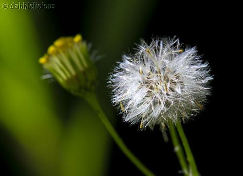 111226 weeding fail