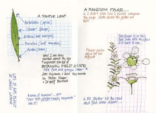 Summer! 27TU_09 Plant studies