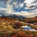 Patagonia Alive