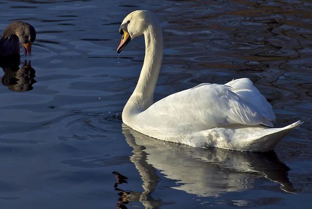 Gona get that Goose