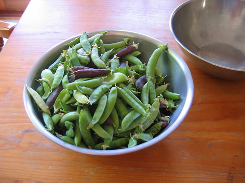 Shelling peas Summer 2011
