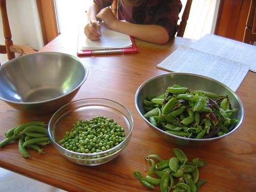 Shelling peas Summer 2011