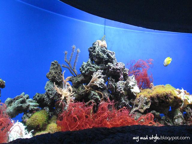 Denver Aquarium 13