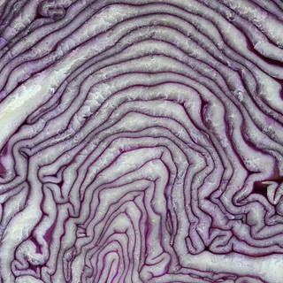 cabbage_red_2122