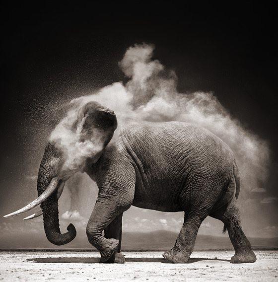 Elefantastiskt