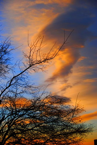 atmosphere atmospheric beautiful beautifulsky branches burningsky clouds cloudy color colorful colors colour colourful day enhanced hdr heavens leafless lenticular lenticularclouds orange red redsky silhouette sky sunset theskyisonfire tree treesilhouette trees upward weather cielo everybodylovesasunset atardecer