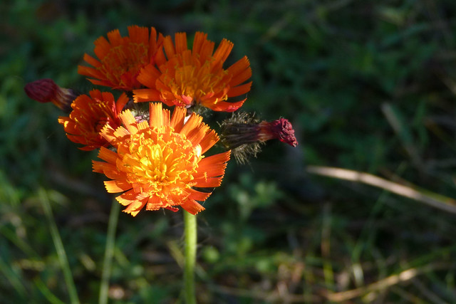 Week 2 - Orange (in colour)