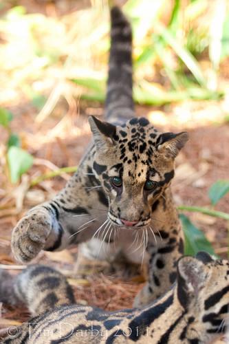 2011-12-26 - Zoo-819