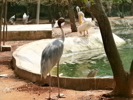 Guindy-Childrens-Park-21