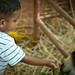 Small photo of Animal friendly Akhil