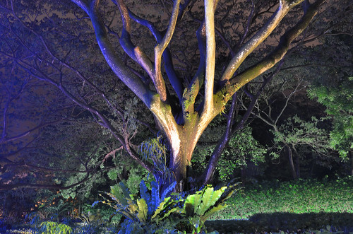 Tree on Orchard Road