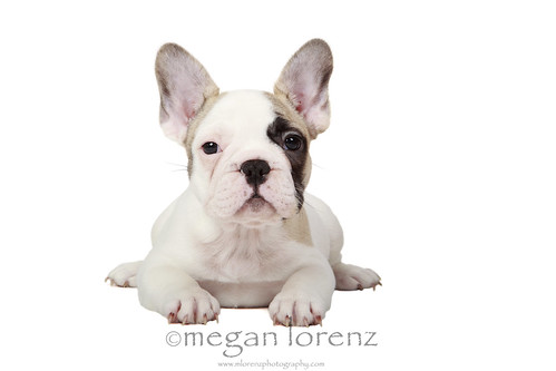 Frenchie Or Frog by Megan Lorenz