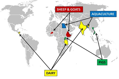 Livestock and Fish research program: Focus value chains and countries