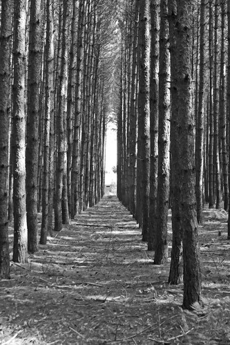 Forrest in black and white