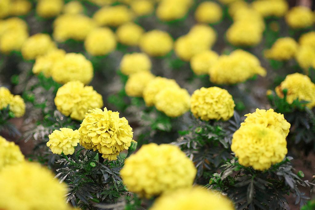 台南公園花兒拍拍