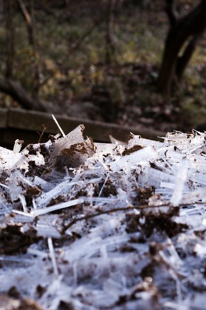 winter mute