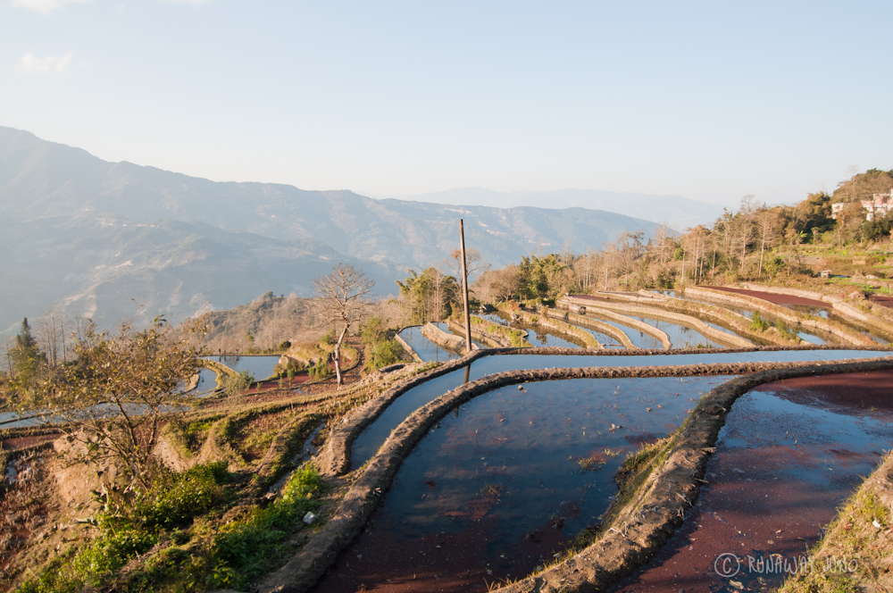 Flooded Yuanyang Rice Terrace