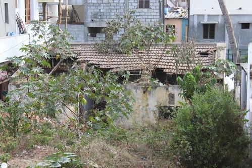 Mysore India 024