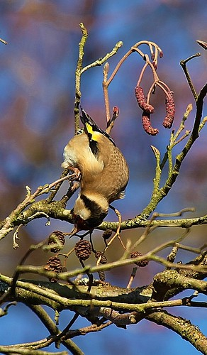 Goldfinch Woods Mill Sussex by Kinzler Pegwell