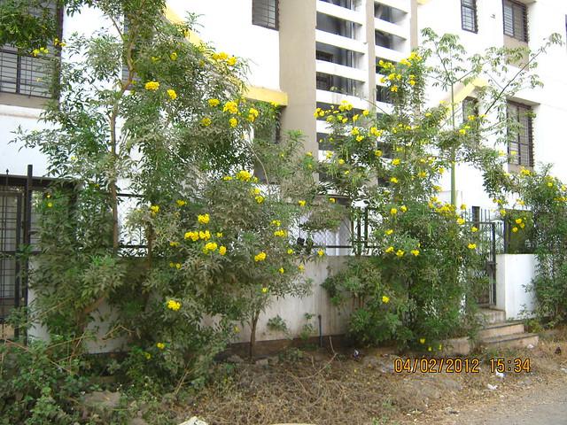 Lane to Gini Viviana, 2 BHK 2.5 BHK 3 BHK Flats & 3 BHK Duplex, behind MITCON, opposite Balewadi Sports Complex, Balewadi, Pune 411 045