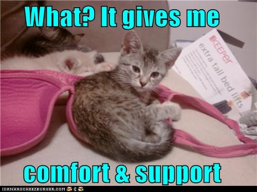 funny-pictures-what-it-gives-me-comfort-support