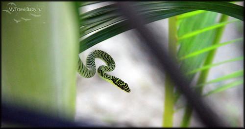 samui-snake002