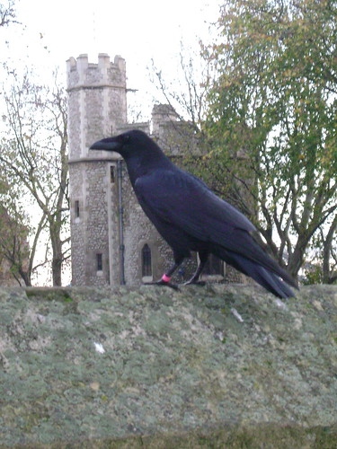Tower raven