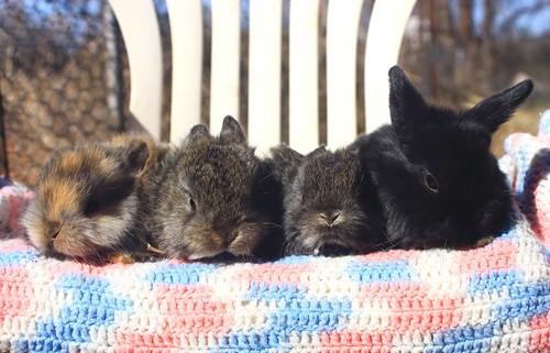 Bundle of Bunnies