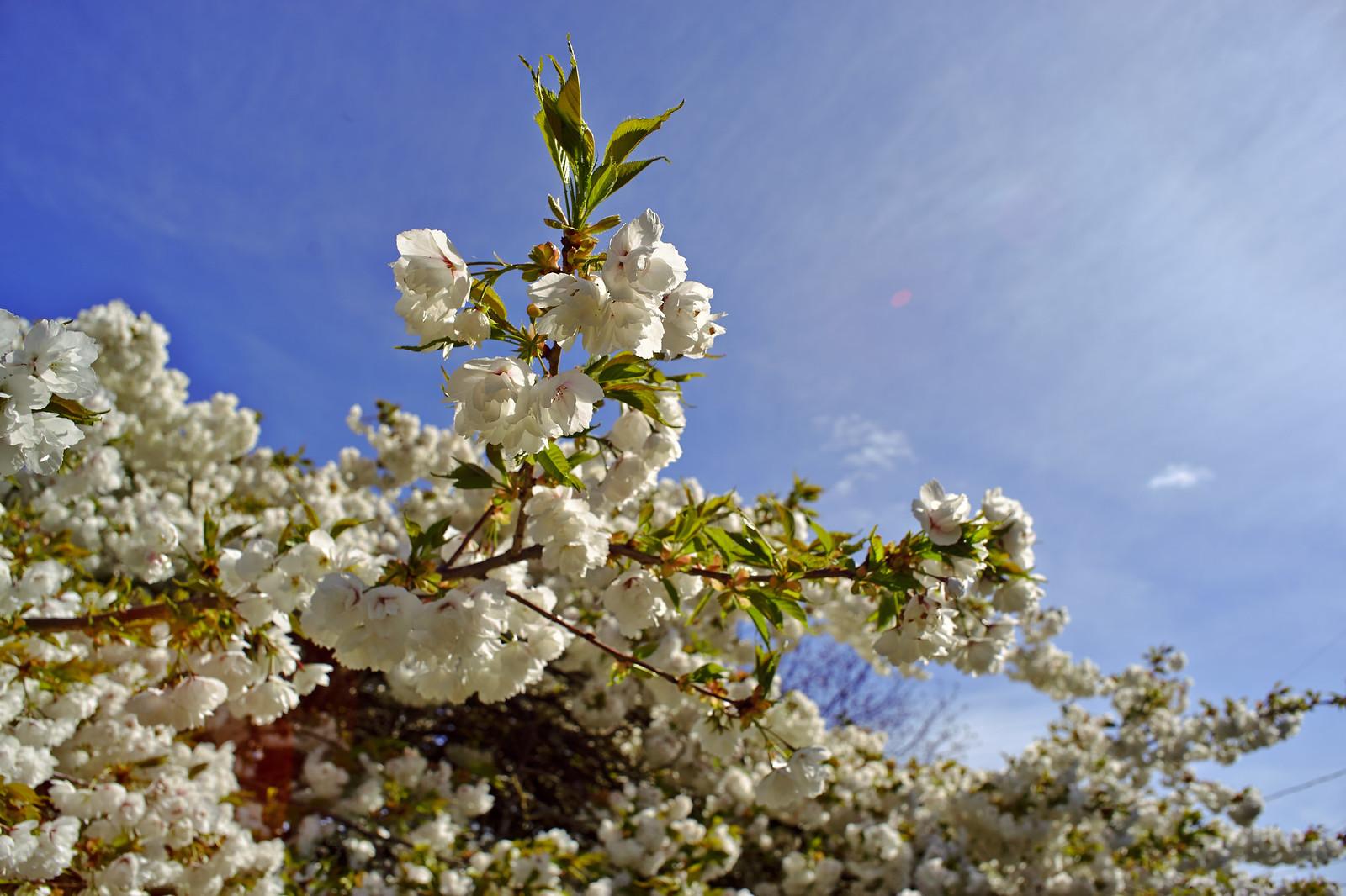 春天的街道(四) A7 + Leica-R 50, R 28 (更正 + Pentax 43 LE)