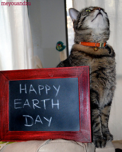 Chubbs Earth Day
