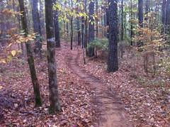 Lincoln Parish Park Trail Woods