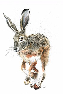 "6) ""Should I Stay or Should I Go?"" hare"