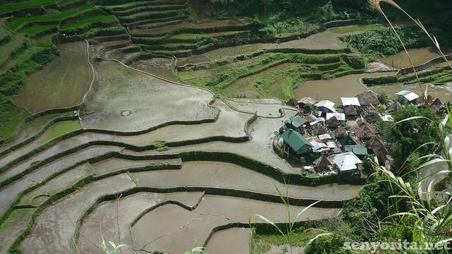 Batad-Ifugao-P2-187