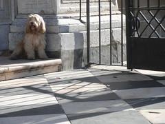 Esperando en la puerta de la catedral