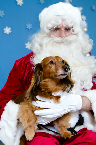 Lulu & Santa 2011