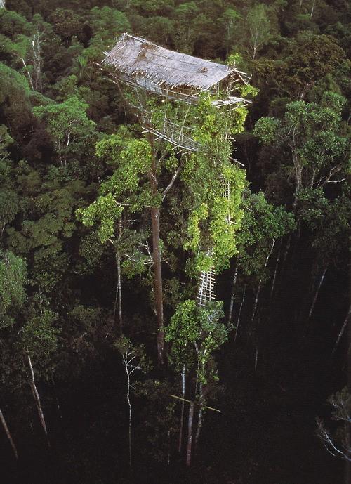 treehouse_011