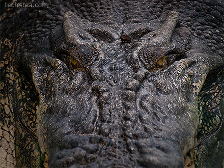To take macro photo of crocodile's eyes, simply mount camera on mini-tripod and place the tripod on the croc's snout. Try not to get eaten in the process.