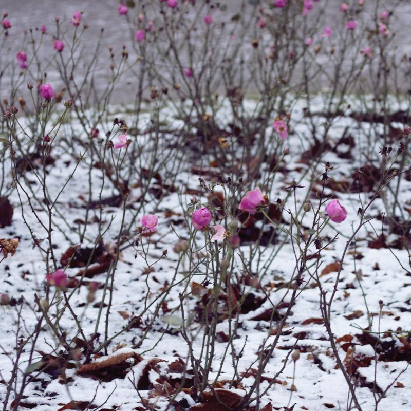 La primera nieve de la temporada