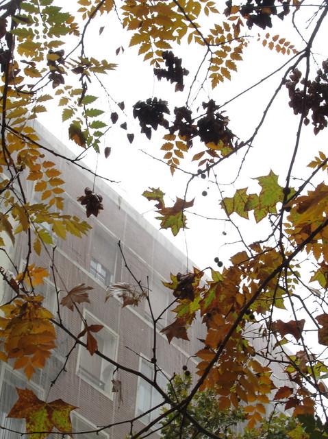 M�s de hojas