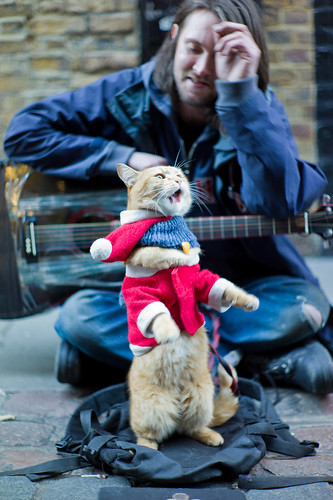 Bob the Big Issue Cat performs