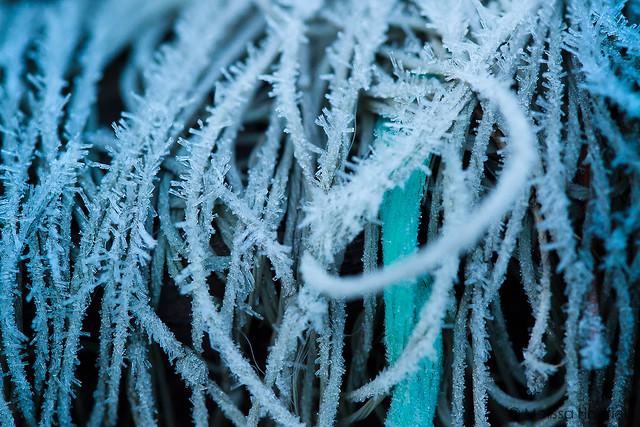 Frosted Garden Netting