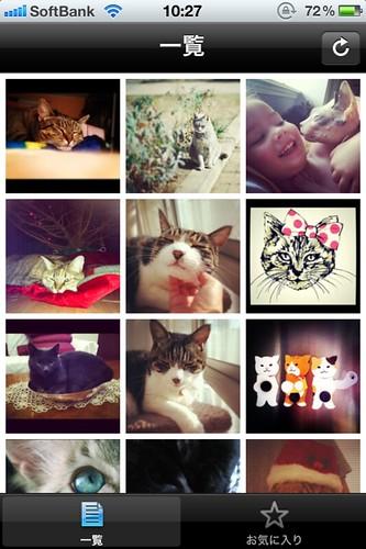 有料猫画像