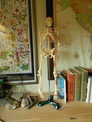 Big Tim the Anatomy Skeleton